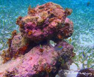 Lots of coral in Belize