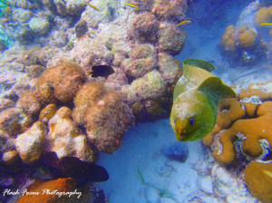 Underwater photography, Ambergris Caye Belize